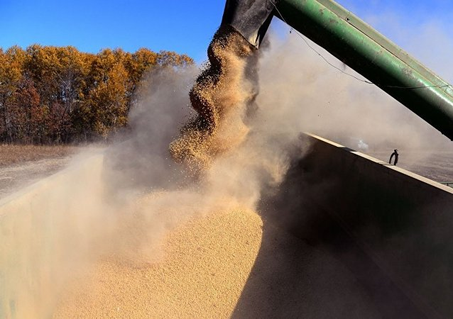 近年中国大豆进口占粮食进口总量的80%以上