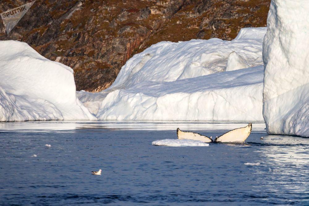 俄Rusarc公司格陵兰岛探险之旅