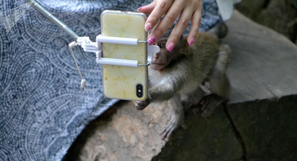 哥斯达黎加或禁止游客与野生动物自拍