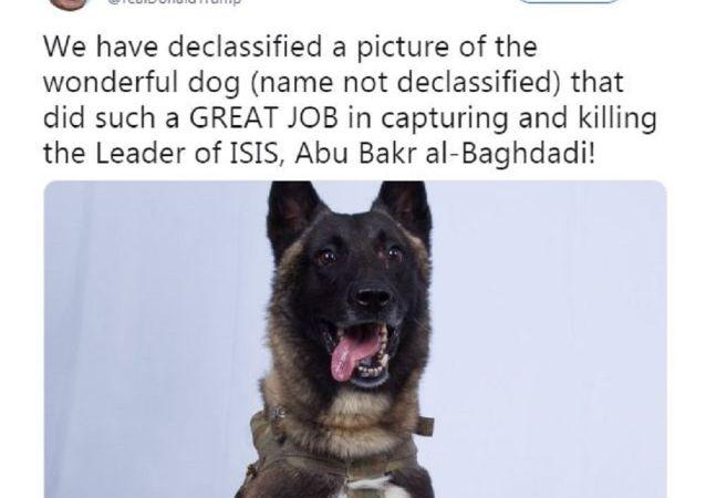斩首巴格达迪行动立功军犬受邀作客白宫