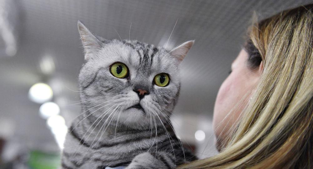 研究:武汉的猫群感染冠病 或由人传播