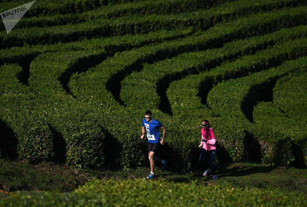 索契茶园中的跑步比赛