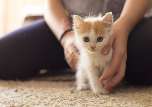 宠物能帮助人更好度过隔离期