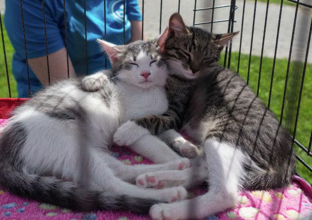 德国两只猫感染冠状病毒