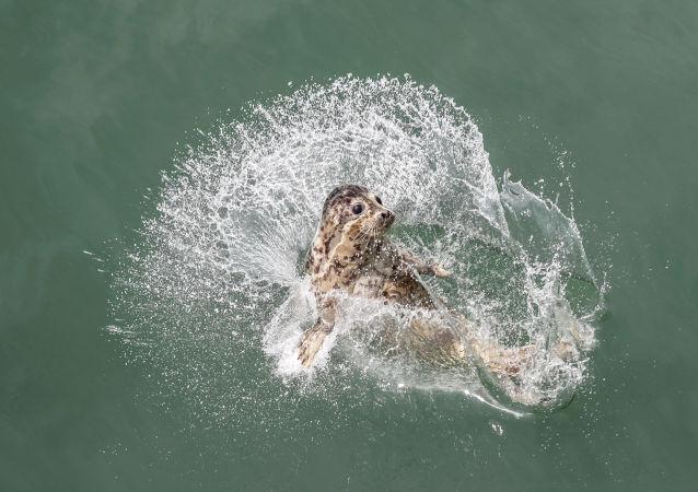英国潜水员与温柔海豹水中共舞