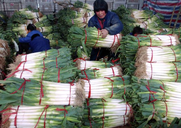 媒体:尼泊尔因印度洋葱出口禁令改从中国进口