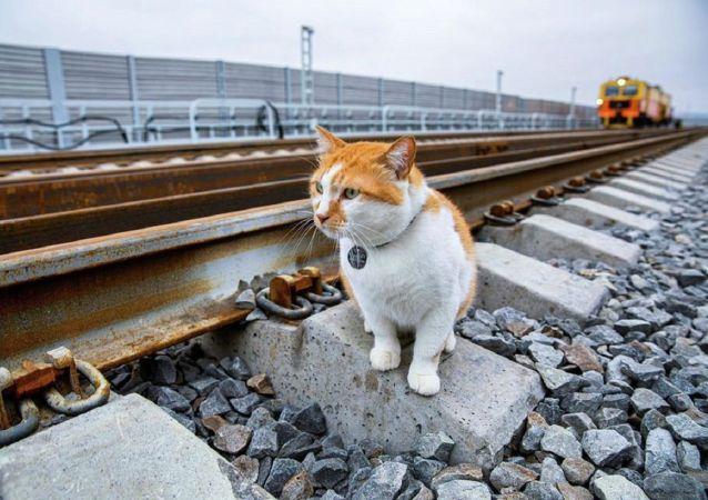 """""""监工猫""""小桥巡视克里米亚大桥铁路部分"""