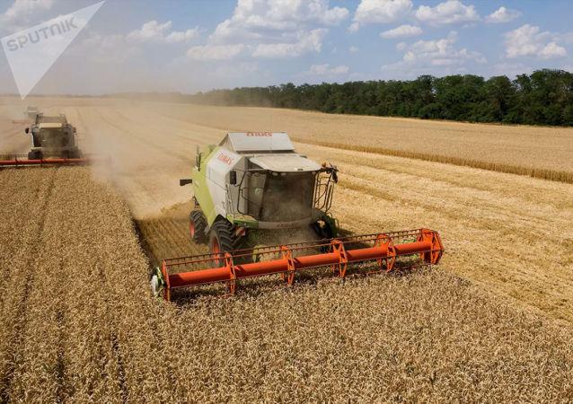 俄农业部没考虑借助关税限制俄小麦出口的问题