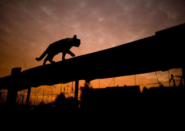 香港渔护署:出现首例猫只对冠状病毒测试呈阳性反应