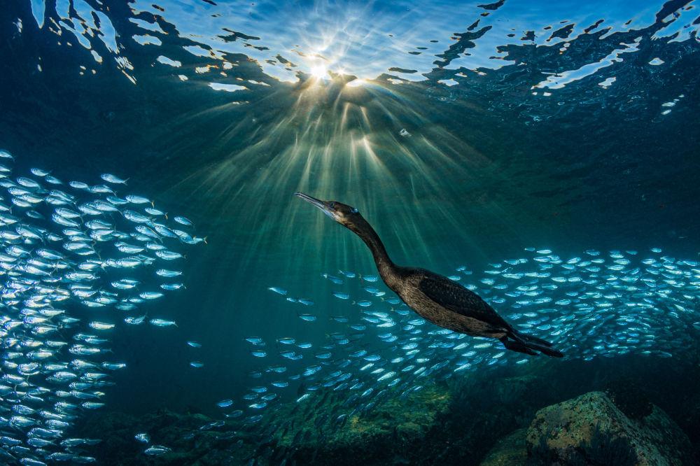 2019年海洋艺术水下摄影大赛获奖作品出炉