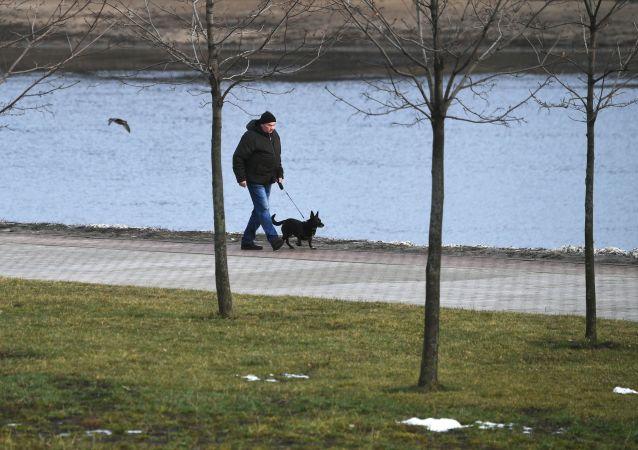 莫斯科冬天气温创观测史上最暖记录