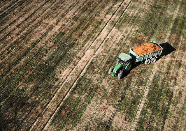 意大利农民艺术家用拖拉机在田间绘制新冠病毒图