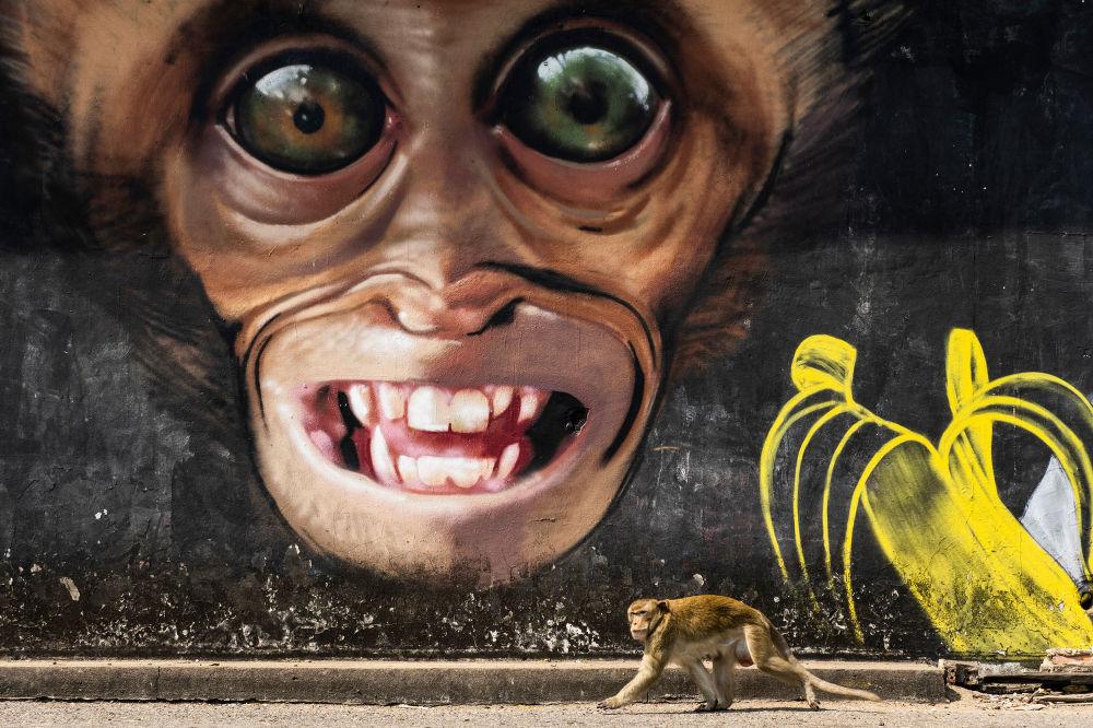 西班牙专业摄影师琼·德拉·马拉的摄影系列《猴子城市》中的作品《猴子涂鸦》