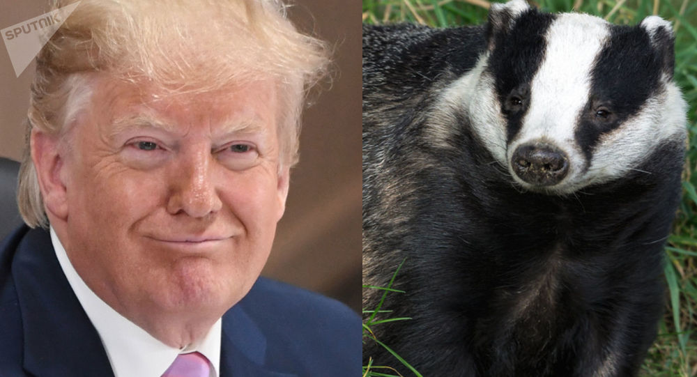 特朗普对獾子的痴迷公诸于世