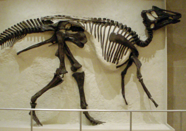 科学家在恐龙骨中发现了DNA迹象