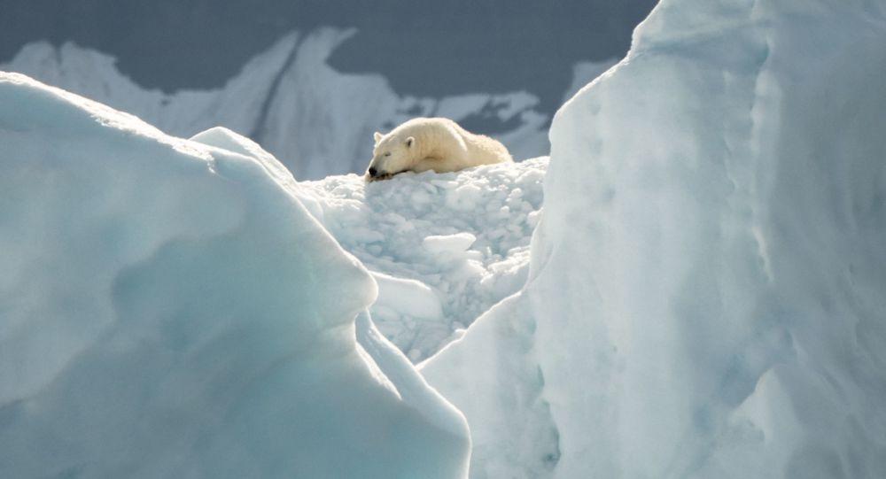 到2050年北极冰层可能在夏季完全融化