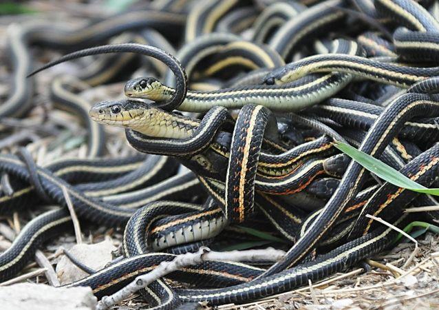 印度当地居民在空调中发现蛇窝