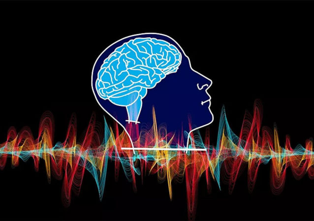 人类全部脑叶均负责面部和位置识别