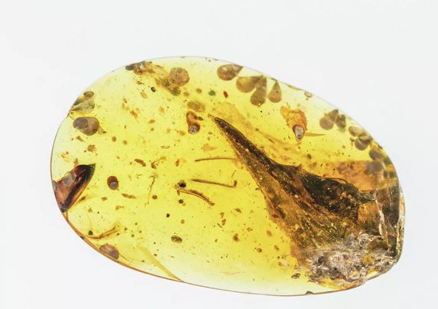 专家发现最小恐龙 大小接近蜂鸟