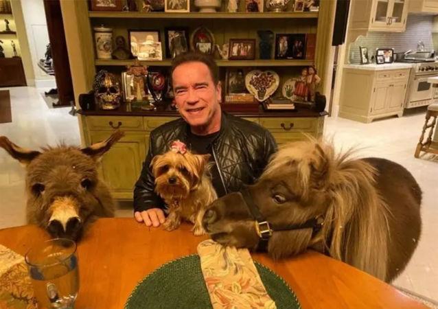 施瓦辛格在隔离期间与自己的宠物驴下象棋