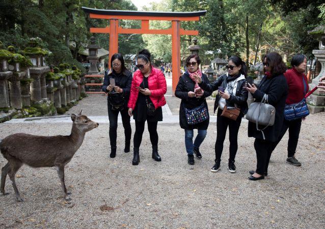 Дикий олень на улице в Японии