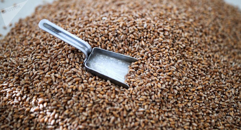 俄从3月1日起提高小麦出口税费 从3月15日起提高玉米和大麦出口税