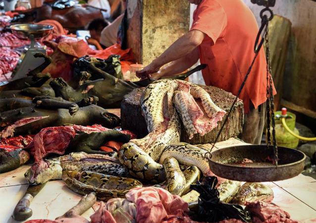 动物贸易市场