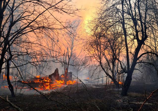 森林大火(资料图片)