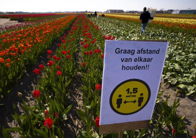 荷兰疫情高峰已过期 局势稳定