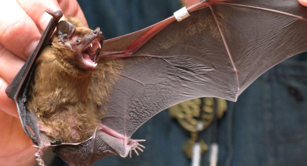 俄消费者权益保护局专家在蝙蝠身上发现冠状病毒