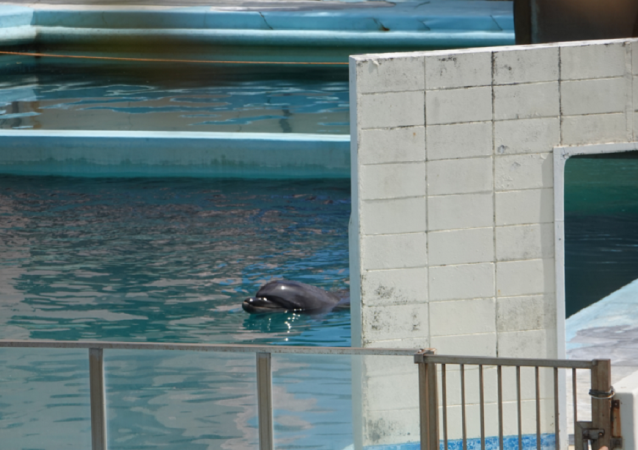 世界上最孤独的海豚死亡