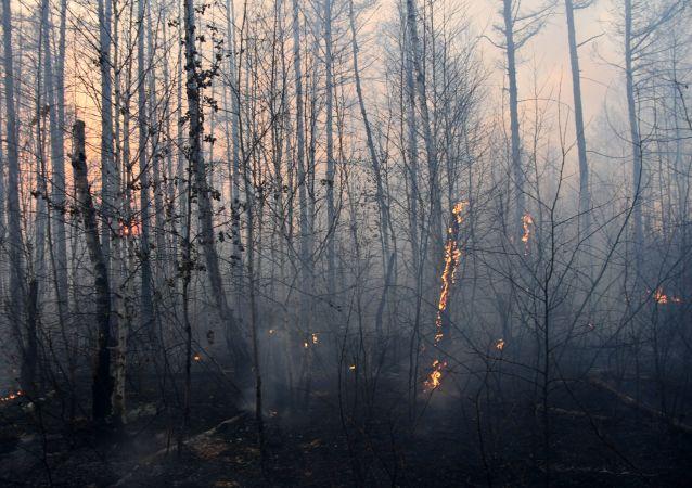 俄罗斯森林消防部门单日扑灭39处林火