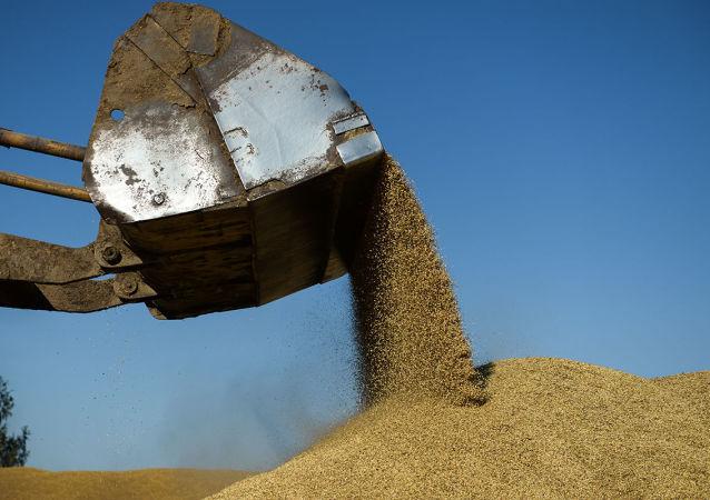 俄向朝鲜提供2.5万吨粮食