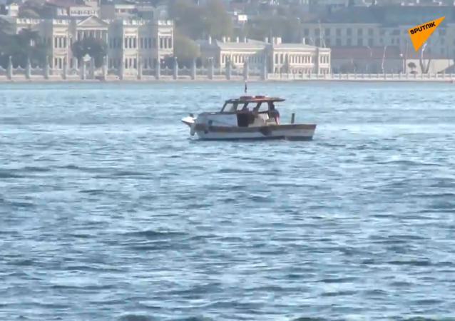 海豚重返伊斯坦布尔