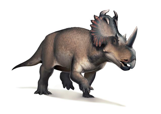 美国古生物学家为恐龙命名纪念大卫·鲍伊的一首歌