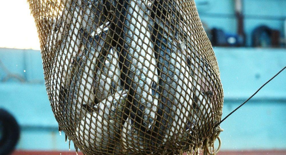 南美四国要求紧急停止在加拉帕戈斯群岛非法捕捞