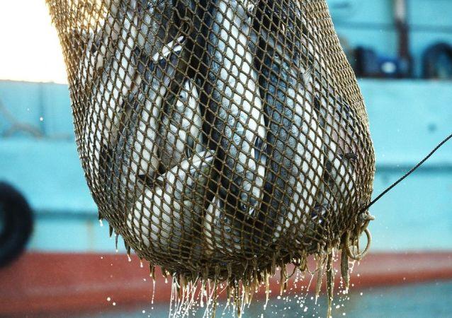 中国再次从来自厄瓜多尔的鱼产品中发现新冠病毒