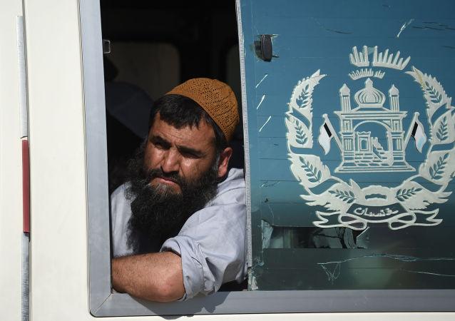 媒体:阿富汗政府宣布释放317名塔利班武装分子