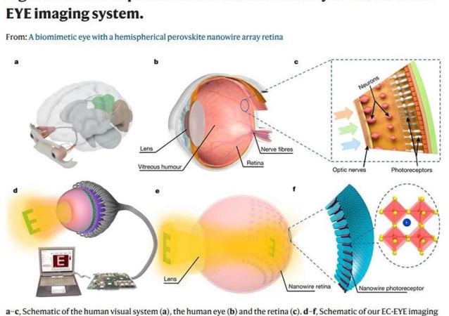 展望未来:香港科学家制造出全球首个可用3D仿生眼