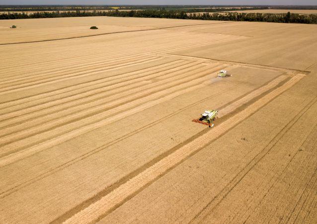 彭博社承认俄罗斯在全球小麦市场的主导地位