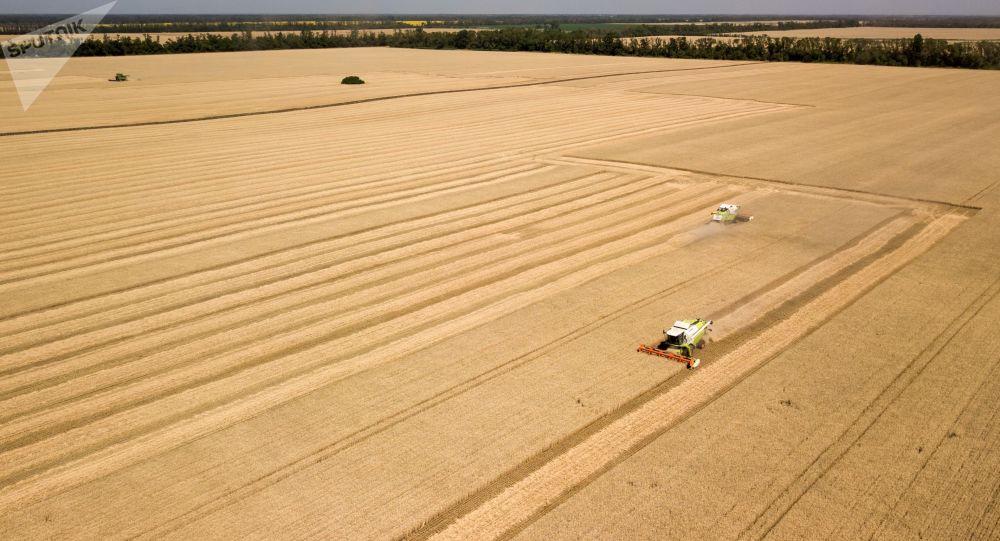 俄农业部:2020年俄谷物收成将超过1.25亿吨 小麦至少8200万吨