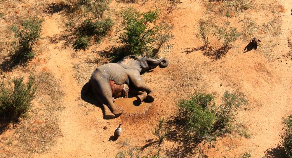 """津巴布韦大象""""神秘""""死因已被查明"""